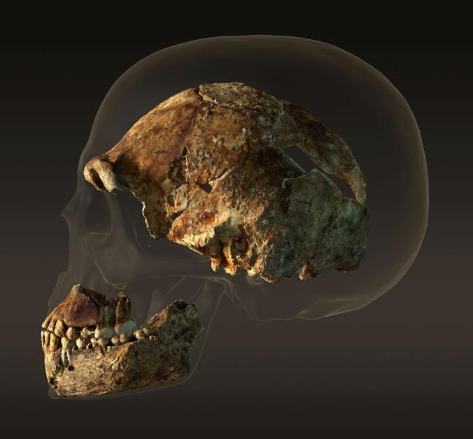 0904_Human_Skull_Persp_Peter_Ohne_Schatten_sf_Kamera-7_001.ngsversion.1442431803424.adapt.676.1