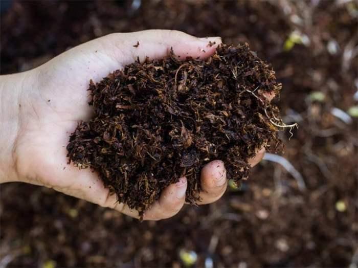orgainc-soil