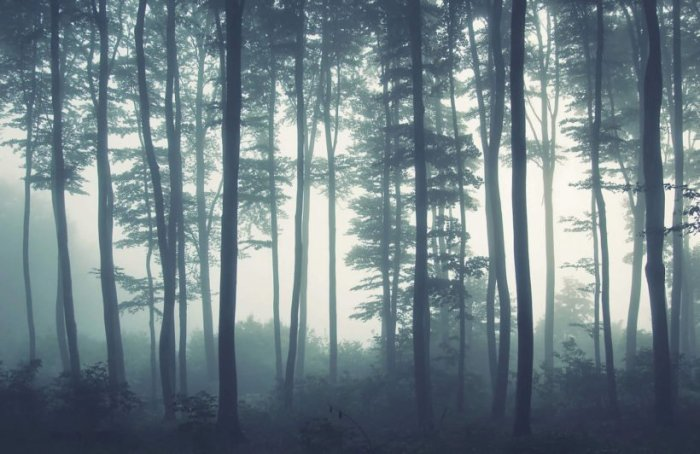 sea-of-trees-forest-plain-820x532